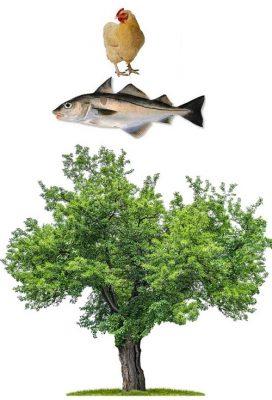 Hen Haddock Tree